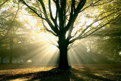 Luce negli alberi